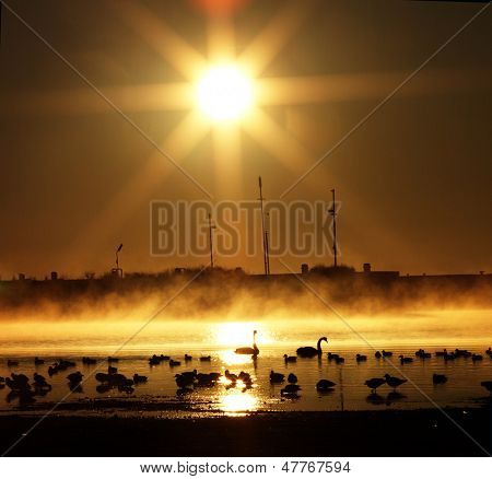 Golden Sunrise at wetland wildlife poster