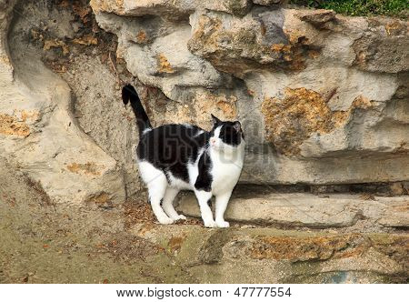 Black and white cat abandoned in a Parisian public garden (France)