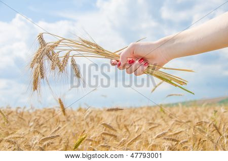 A Woman Holding A Stack Of Wheat