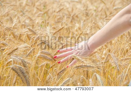 A Woman Touching Wheat