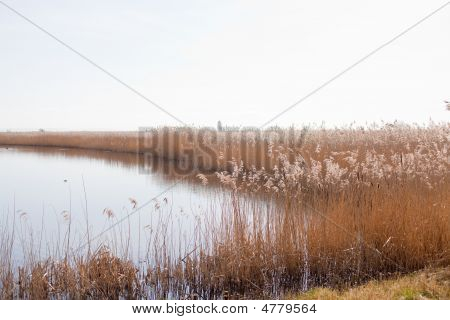 Lake Surrounded By Reeds, Calm Nature Background