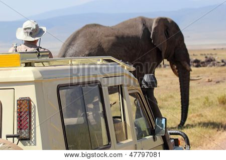 An old african elephant (Loxodonta Africana) crossing near a vehicle in Ngorongoro Conservation Area Tanzania poster