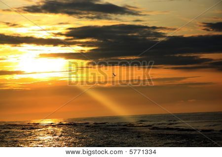 Orange Decline Over The Sea