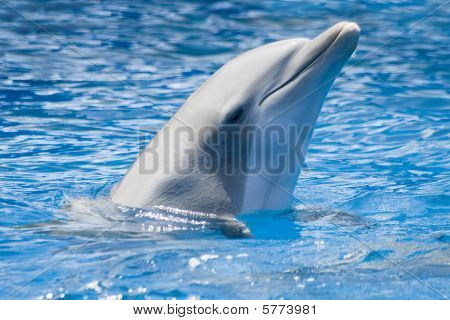 This is a picture of a captive dolphin poster