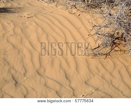 Windswept desert sands in New Mexico hint at the dynamism of earth process.