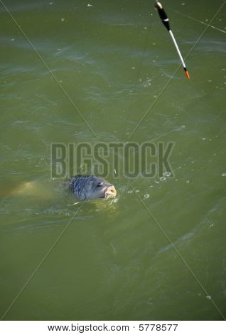 Angling Fish