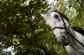 horse in the park(focus on the left eye of the horse) poster