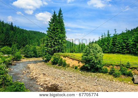 Wild Mountain River Near Forest