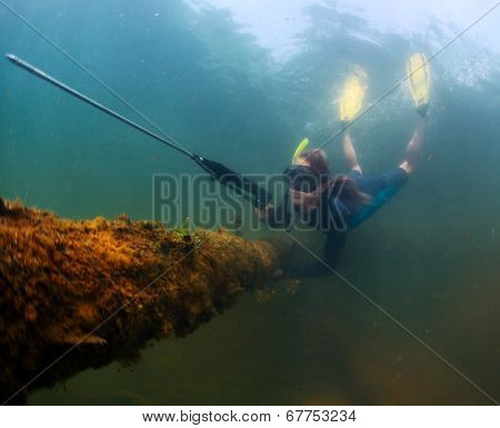 Underwater shot of the lady diving with spear gun on a breath hold