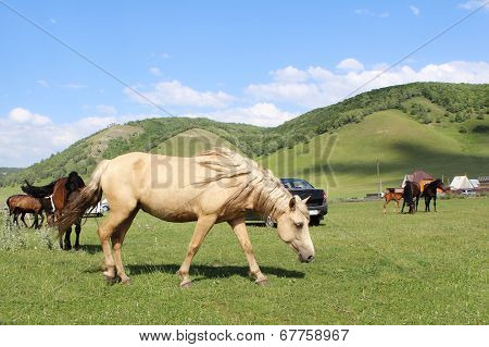 Horse Grazing On A Green Field