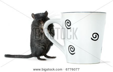 Gerbil standing with a big cup of tea isolated on white poster