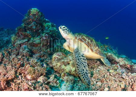 Green Turtle deep underwater