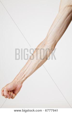 Veins Of A Man