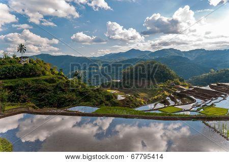 Rice-terraces Near Poitan-village