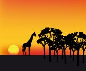 nice illustration of sunset in Africa with silhouette of giraffe poster