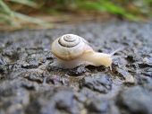 Snail on road poster