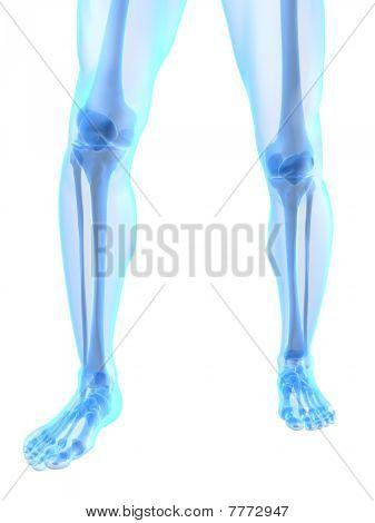 knee illustration