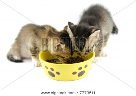 Kittens Eating Dry Food