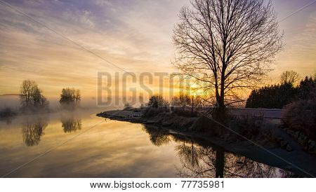 Lone Leafless Tree At Sunrise With Fog