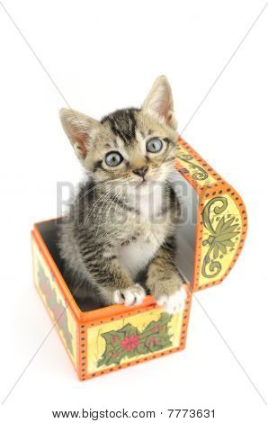 Lovely kitty in treasure box isolated on white background poster
