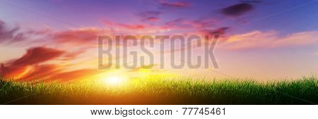 Green grass on sunset sunny sky, nature theme. Panorama or banner