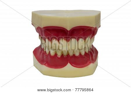 Acrylic Denture Set