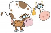 Spotted Calf By A Mom Dairy Cow Cartoon Character poster