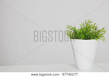 Green Potted Plant On Table With Copy Space