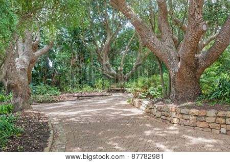 Walkway And Bench In The  Kirstenbosch National Botanical Gardens