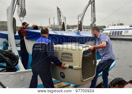 PRIOZERSK, LENINGRAD OBLAST, RUSSIA - JULY 29, 2015: People carrying the cage with Ladoga ringed seal to the ship. Animals were cured and released into the Ladoga lake