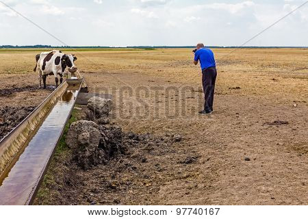 Cow At The Water Trough.