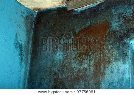 Dangerous Toxic Fungus Mold