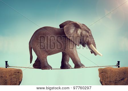 Elephant On A Tightrope