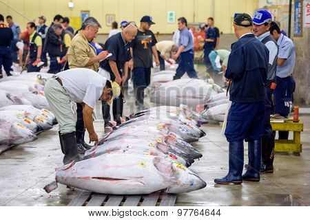 TOKYO, JAPAN - AUGUST 1, 2015: Prospective buyers inspect tuna displayed at Tsukiji Market. Tsukiji is considered the world's largest fish market.