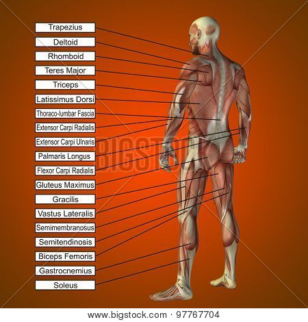 Concept or conceptual 3D male or human anatomy, a man with muscles and text on orange gradient background
