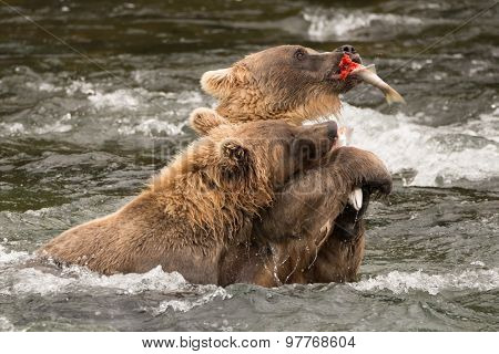 One Bear Holds Salmon Away From Another
