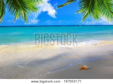 Seashell on beach and sea wave. Caribbean sea and palm leaves.