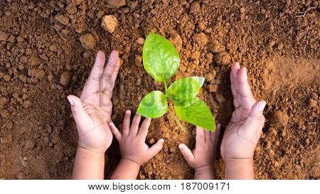 Agriculture and planting in spring gardening conceptClose up Kid hand and father planting young tree