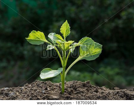 Young Green Plant On A Green Blurred Background
