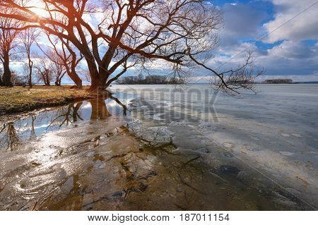 Sunny day in early spring on the lake. Melting ice on the lake surface. The tree bent over the water and reflected. Blue sky with clouds. Spring landscape of frozen lake. Spring is coming.