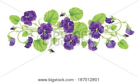 heartsease with leave, water drops and flowers. Vector realistic illustration. On white background. Design for grocery, farmers market, tea, natural cosmetics, summer garden design element.