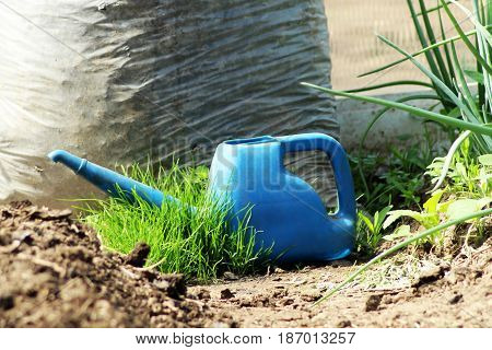 Blue Watering Can, In The Garden