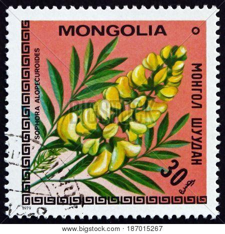 MONGOLIA - CIRCA 1979: a stamp printed in Mongolia shows Sophora Root Sophora Alopecuroides Plant circa 1979