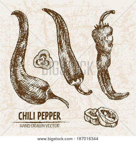 Digital vector detailed line art chili pepeper vegetable hand drawn retro illustration collection set. Thin artistic pencil outline. Vintage ink flat style, engraved simple doodle sketches. Isolated