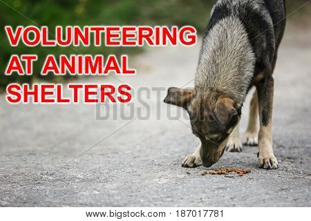Concept of volunteering at animal shelters. Homeless dog eating outdoor