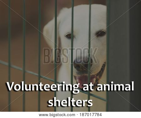 Concept of volunteering at animal shelters. Homeless dog in cage outdoor