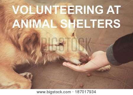 Concept of volunteering at animal shelters. Woman feeding homeless dog outdoor