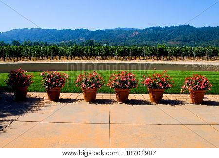 Napa Valley vineyard in California