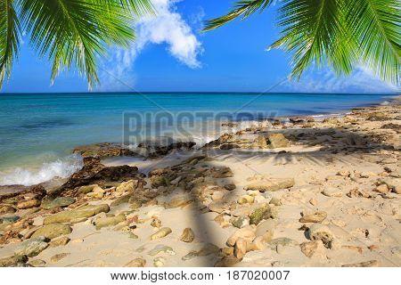 Beautiful caribbean sea and green palm leaves .Punta Cana, Dominican Republic.