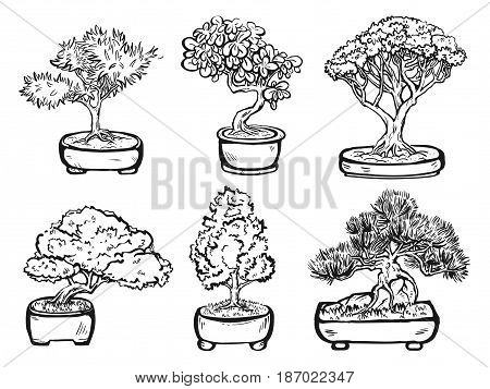 Set of handdrawn isolated decorative asian bonsai trees in the pots.
